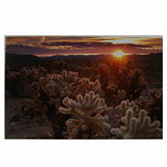 Cholla gardens J. Long Phtography